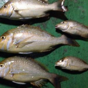 タマン釣り