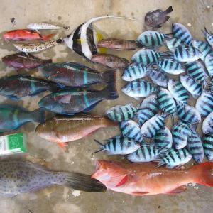 過去に釣ったお魚達 15回分の釣果です。