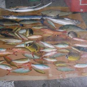 過去に釣ったお魚達、11回分の釣果