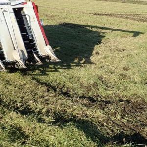【庄内米移植栽培2019】本日から稲刈りを始めました。【逆進入路手刈りなし】