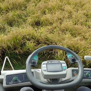 はえぬき鉄コ直播の刈取りをもって2020年シーズンの稲刈を終了と、3年間の直播の振り返り。