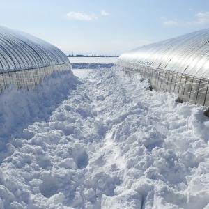 降雪によるビニールハウスの倒壊予防と冬山登山装備の関係。