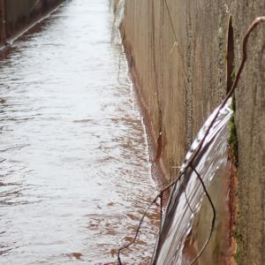 耕起に備え、冬季間蓋をしていた暗渠の排水をはじめました。
