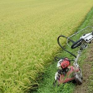 【直播・移植共通作業2019】稲刈り前の草刈りをしています。
