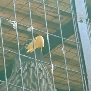 【北海道】動物はGW疲れ⁉️円山動物園で楽しんできました❗