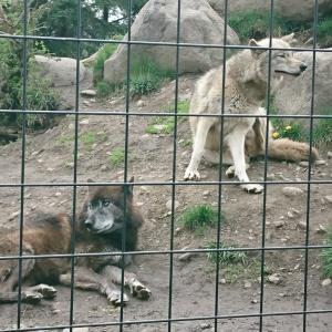 【北海道】旭山動物園にも行きました🐅