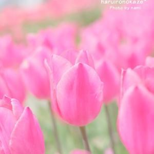 咲いた 咲いた♪・・