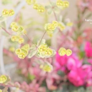 ちょっと可愛い…花?