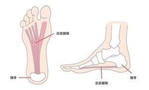 膝裏の痛みとアキレス腱の関係って?