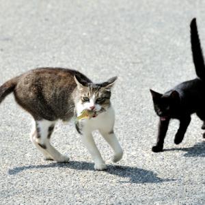 のら猫とどら猫の違いは?盗むかどうかで決まる?語源・由来も調査!この差って何?10月22日