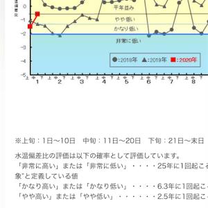 2020/1/27熊石方面 海サクラ