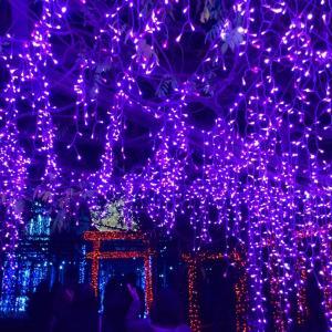 ◆花と団子、両方を満喫した休日♪  回遊式日本庭園「由志園」のイルミネーション