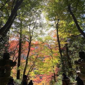 お初の香嵐渓🍁 2019/11/18の収益