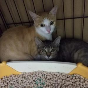 例の野良猫のうち、2匹保護出来ました。
