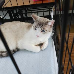 譲渡会に参加や出し物を購入させていただきました、あと野良猫が捕獲出来なくて困ってます;