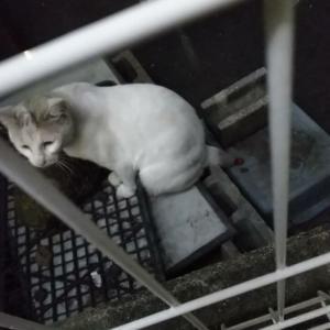 Twitterにて野良猫の保護の協力とご支援のご協力をお願いさせていただきました。