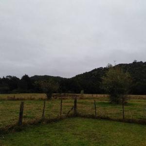 【おうち時間】ニュージーランドど田舎の私の休日の過ごし方