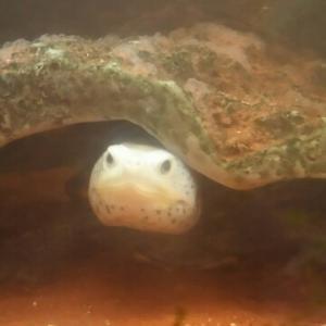 水棲カメの病気対策。
