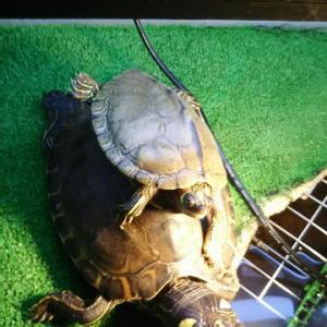 爬虫類用紫外線ライトについて
