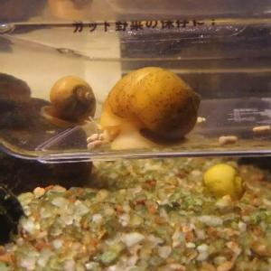 水亀の飼育に役立つ仲間と水質の重要性