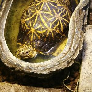 爬虫類飼育に使える断熱材。
