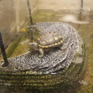 子亀の飼育