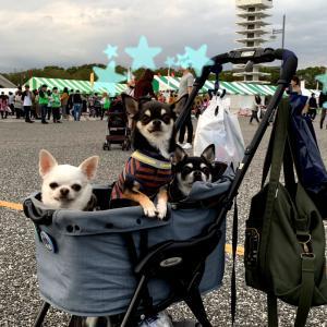駒沢わんこ祭り 今更の戦利品