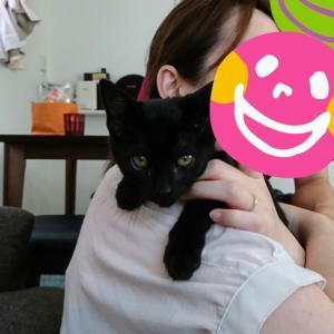 【新庄チーム】全頭譲渡終了!黒猫♀ちゃん、優しいパパとママの元へ
