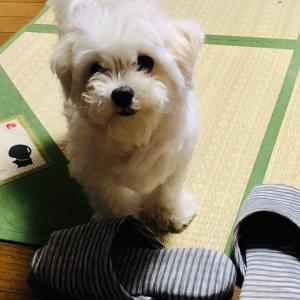 散歩無し後(*'ω'*)