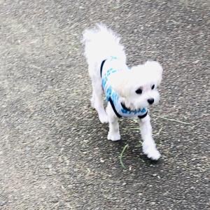 朝散歩で快腸〜(*´꒳`*)