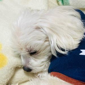寝床(*´꒳`*)