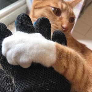 猫の換毛期 手袋型vs毛すき型