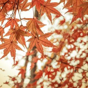 10月の雑学!旧暦では「神無月」!由来や行事は何がある?誕生石やイベントなど!