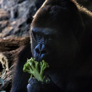 知っているようで知らない動物の雑学10選!明日使える雑学まとめ!