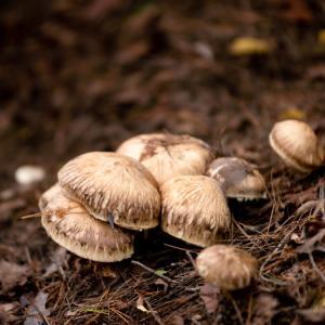 知って得する秋の雑学!秋と言えば食欲の秋!サツマイモを食べてもおならを出なくする方法!