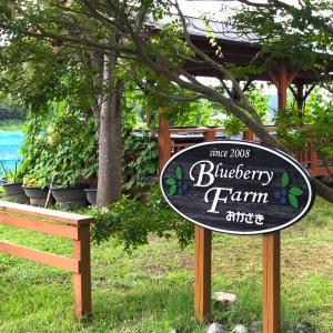 ブルーベリー観光農園に行ってきました。その3(愛知県岡崎市)