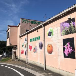 アグリー福智の郷(常設農産物直売所:福岡県直方市)に行きました