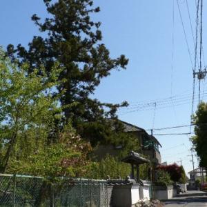 【近隣徘徊】池田編〜<2>:西国巡礼街道を行く〜一本杉