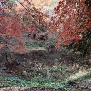 【近隣徘徊】野池探訪:その2〜野池の今は・・・?