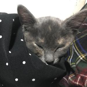 子猫の急性胃腸炎〜嘔吐がとまらない②〜