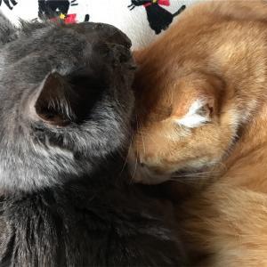 猫の鼻腔内リンパ腫㊳  びっくりする出来事!!