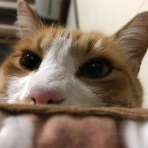 猫の鼻腔内リンパ腫㊶  くぅからカーヤへのプレゼント♬