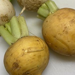 黄金カブと言う名の優しいお味の黄色い蕪、収穫しました。