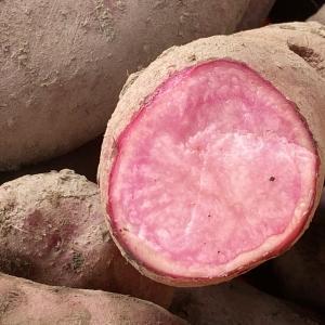 果肉がほんのり赤いじゃがいも、ノーザンルビから収穫です。