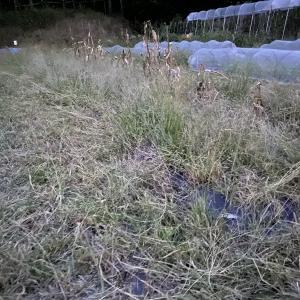 連休は草刈りと菜園の片付けに追われていました。