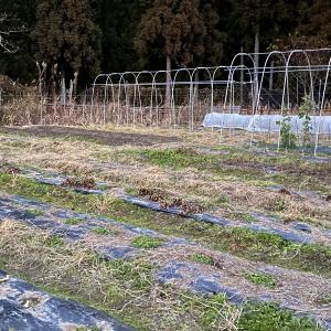 今年最後の菜園作業です。2020年勉強の多い年でした。有り難うございます。