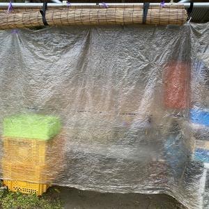 人間の寒さ対策で菜園作業も少しほっこりする時間がもてそうです。