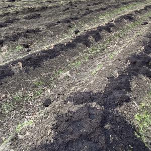 冬期は野菜栽培の計画と準備を頑張っています。