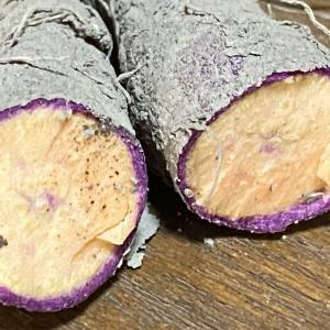 さつまいもお試し栽培。紫のおいも「ふくむらさき」と「ベルベット」「あいこまち」
