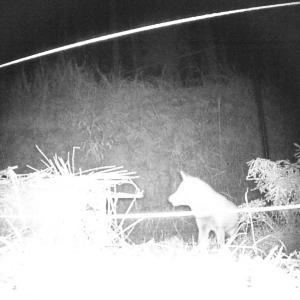 農作物の鳥獣害。トレイルカメラに誰が写るかな~。